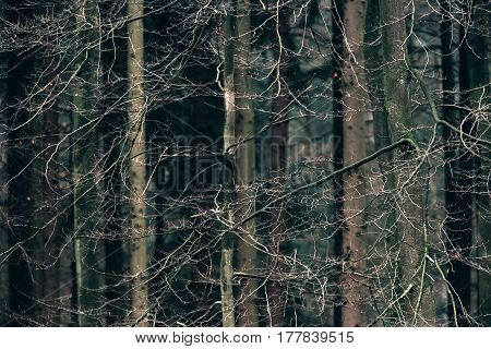 Twigs of trees in a deciduous forest.