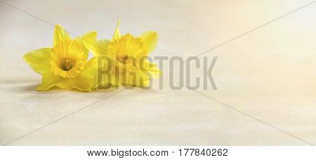 Easter card and banner idea with yellow flower