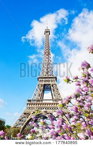 Eiffel Tower in sunny spring day with magnolias in Paris, France