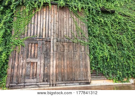 Big wooden door surround with green plant called Birder's Lodge