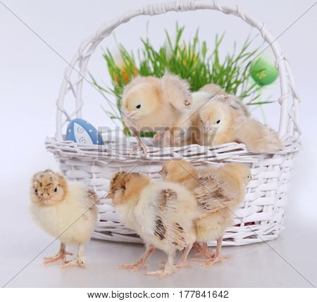 cute boy with little chicks and easter eggs