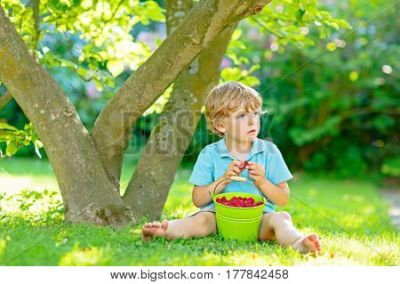 Adorable little kid boy having fun on raspberry farm in summer. Child eating healthy organic food, fresh berries. Happy toddler. Cute gardener helping with harvest. Snack for kids