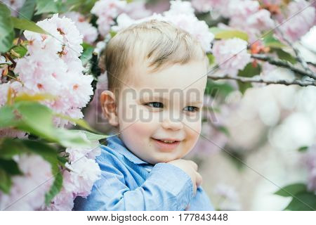 Cute Baby Boy Among Pink Blossoming Flowers