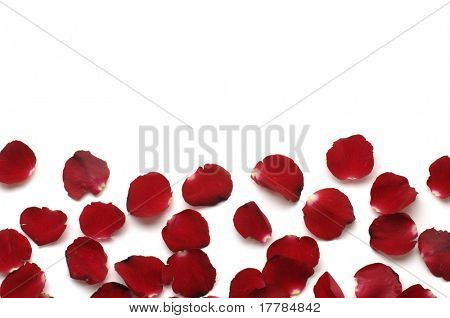 Lots of rose petals with copy space
