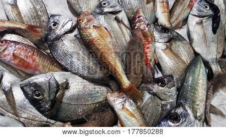 Fresh Fishes In A Market. Orata, Red Mullet And Dogfish