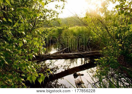 Morning Sunlight Over Stream And Meadow In Acadia National Park