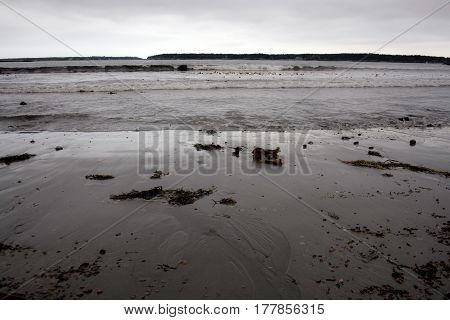 Shoreline On Cold Grey Day In Maine