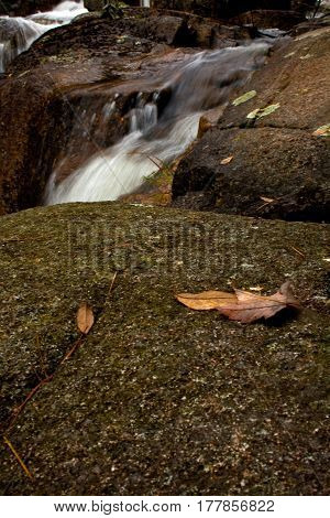 Leaves And Rocks Near Small Waterfall In Acadia National Park