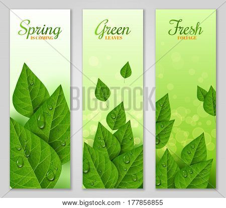 Vertical banners with green leaves and water drops. Morning dew, fresh spring foliage. Vector illustration. Spring is coming concept