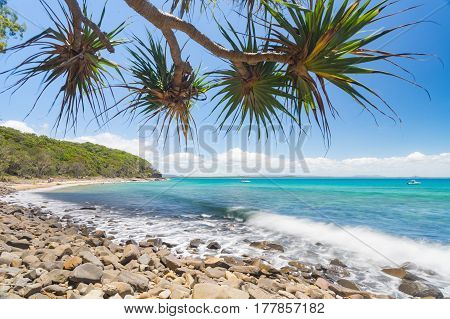 Pandanus trees overhang clear water at Tea Tree Bay in Noosa National Park, Queensland, Australia.