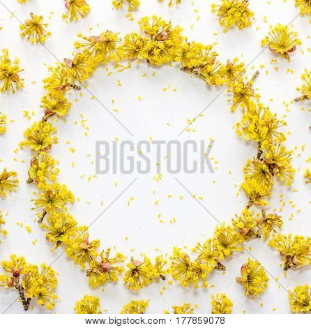 Floral pattern with yellow flowers dogwood with empty space for text on a on white background. Flat lay top view