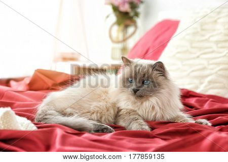 Cute funny cat lying on bed at home