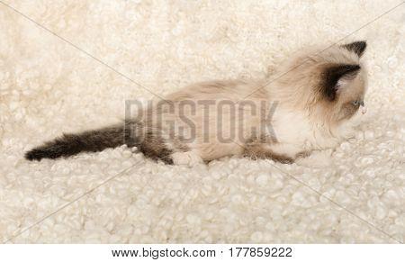 Cute little kitten lying on white plaid at home
