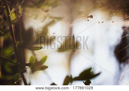 Warm sunlight. Abstract macro picture. Disk of the sun. Cobweb on grass. Wild nature. insect Life