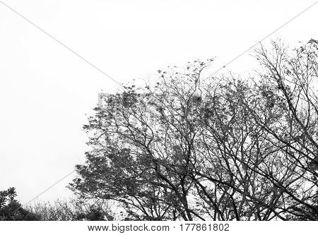 full leaf tree and black and whie tone for background