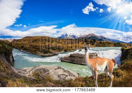 Chile, Patagonia, Paine Cascades. Torres del Paine National Park - Biosphere Reserve. Attentive guanaco on the banks of the roaring waterfalls