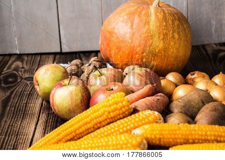 the onions potatoes pumpkin corn nuts apples autumn concept