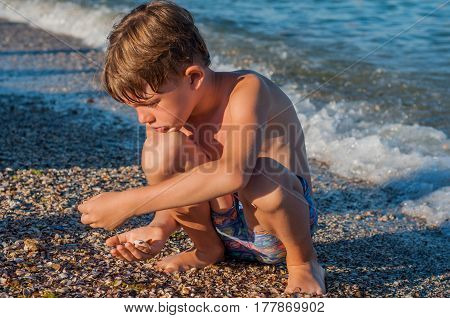 The boy collects seashells on the seashore