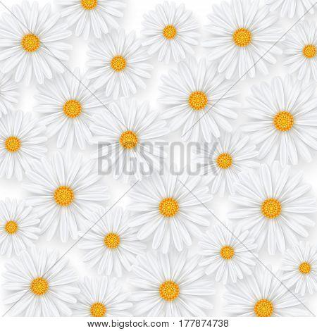 Chamomile summer flower background. Camomile pattern vector illustration