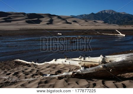 Felled tree lies on the shore of the Medano Creek in the Great Sand Dunes National Park near Alamosa, Colorado