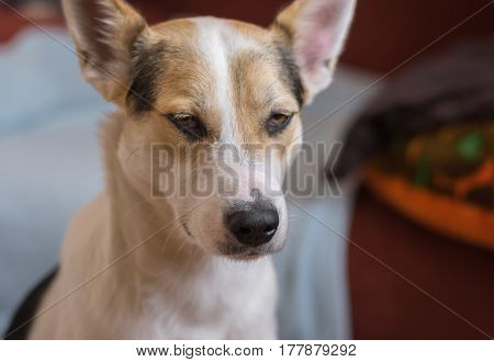 Indoor portrait of young mixed breed dog