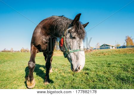 Close Up Of Funny Portrait On Wide Angle Lens Of Horse On Blue Sky Background. Big Head. Lens Distortion
