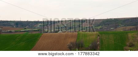 Beautiful spring landscape with field in VojvodinaSerbia