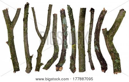Set of sticks covered in lichen isolated on white background