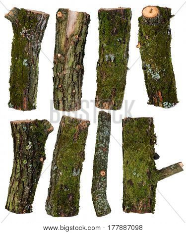 Set of pieces of tree branches isolated on white background