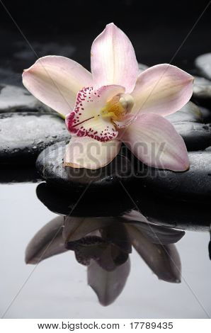 therapy stones with pink orchid