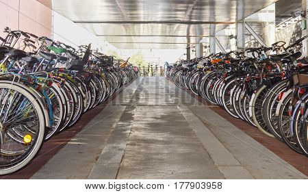 Organized Bicycle Parking In Amsterdam City Centre