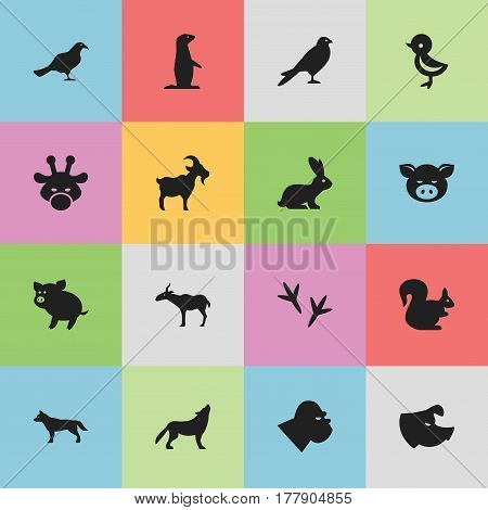 Set Of 16 Editable Zoology Icons. Includes Symbols Such As Wild Rodent, Gull, Camelopard And More. Can Be Used For Web, Mobile, UI And Infographic Design.