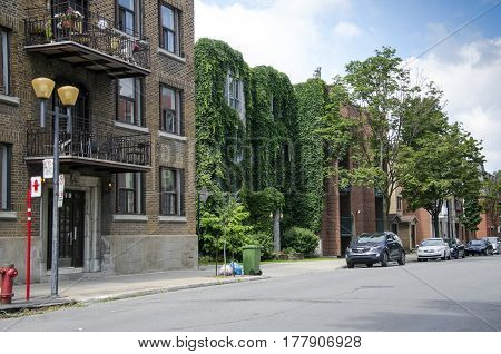 Montreal Quebec Canada - 18 July 2016 - Green House in a sunny street in Montreal in summertime. Covered with ivy as editorial
