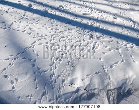 The tracks of the birds on the snow