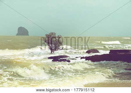 beach erosion trees in the surf due to changing tide levels