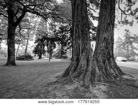Huge Tree At The Botanic Garden