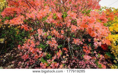 Flowers At The Botanic Garden