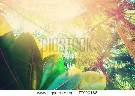 Palm Trees Tropical Landscape Holiday Background
