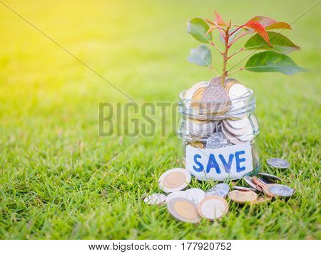 plant growing out of coins in glass jar on the green grass for money saving financial concept