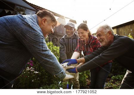 Group of people hand assemble planting vegetable in greenhouse