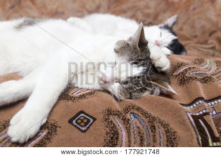 Two cats sleep sweetly on the couch .