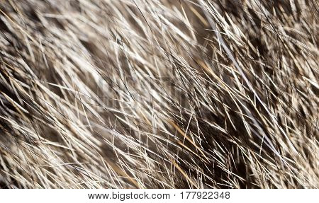 Hair on the cat as a background. macro