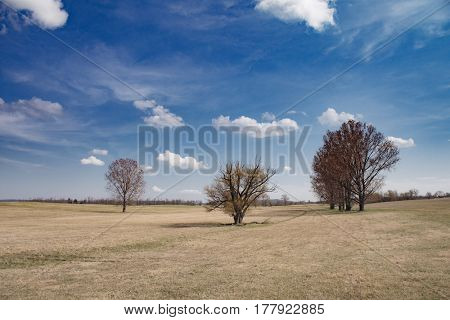Lonely trees under blue sky