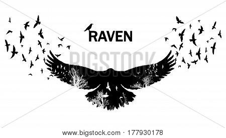 Isolated Flying raven silhouettes with double exposure effect