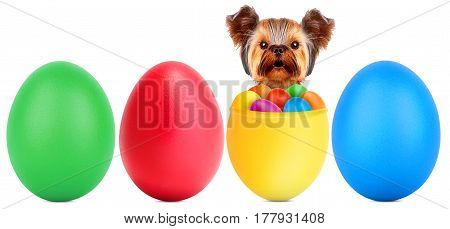 Funny dogs in easter basket with eggs. Holidays concept.