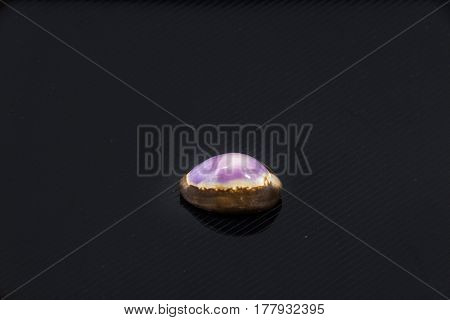 Beautiful sea shell Cypraea annulus on a black background