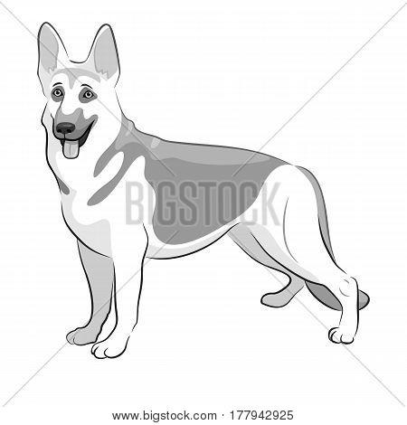 Shepherd German Dog Black and White Vector Illustration. Shepherd on white