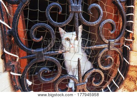 Blue Eyed White Cat Stares At Camera With Safety Net On Its Side