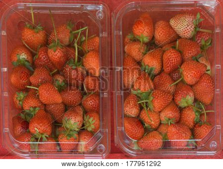 fresh strawberry in plastic package display in a market