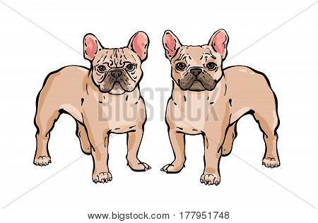 Set Of Hand Drawn Vector French Bulldog.